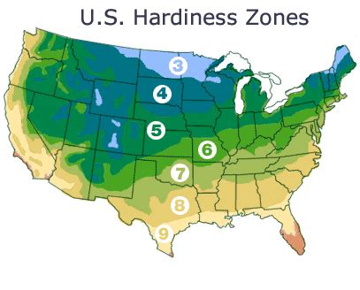 map of growing zones in us hardiness zones small fruit plants shipped from nourse farms