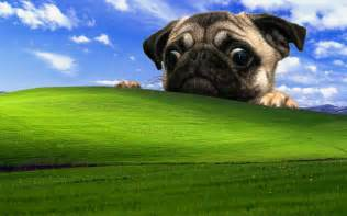 windows xp hd images wallpapers 2948 hd wallpapers site