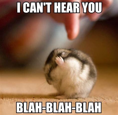 Adorable Animal Memes - 30 funny animal captions part 18 30 pics amazing