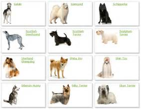 All list of different dogs breeds dog breeds list with picture