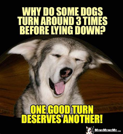 easygoing dog comedian dog jokes images