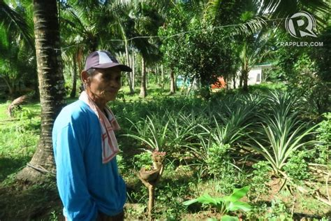 Landscape Definition Tagalog A Green Revolution That May Save Coconut Farmers