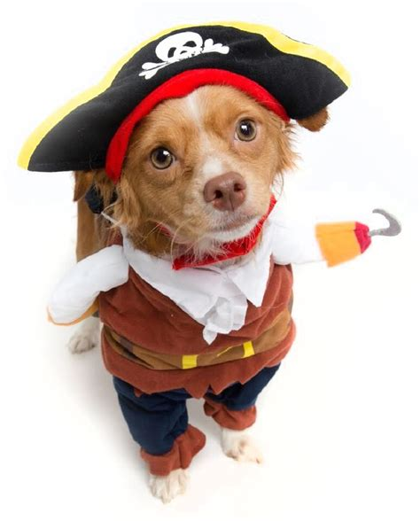 pirate puppy pirate costume