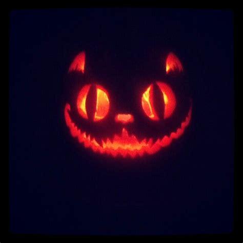 cat pumpkin cat pumpkin carving on a selection of the best