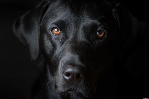 puppy black black wallpaper 1536x1023 84592