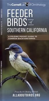 feeder birds of southern california a folded pocket guide