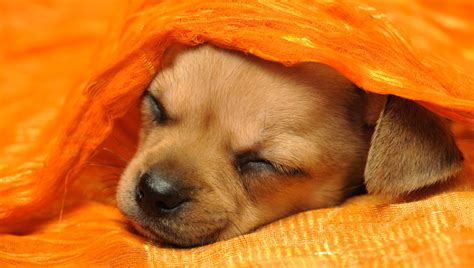 Dogs Sleeping In Bedroom by Should Our Puppy Sleep With Us Or Be Banned From The
