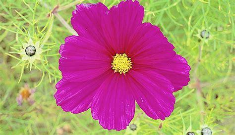 monsieur ibrahim e i fiori corano monsieur ibrahim e i fiori corano 169 antiche curiosit 224