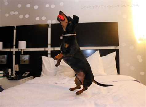 dog jumping on bed the biggest news of my celebrity career yet new york