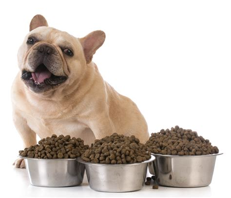 best organic food for puppies best organic food brands