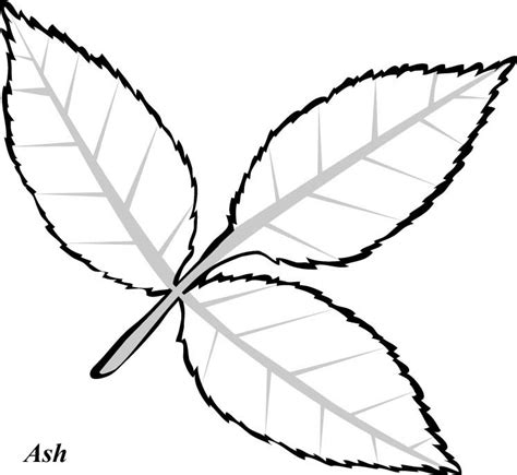 leaf pattern line drawing oak leaf template az coloring pages