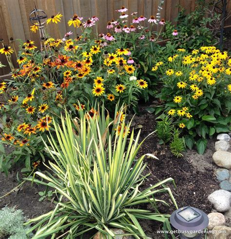 late blooming perennials late summer to do list get busy gardening