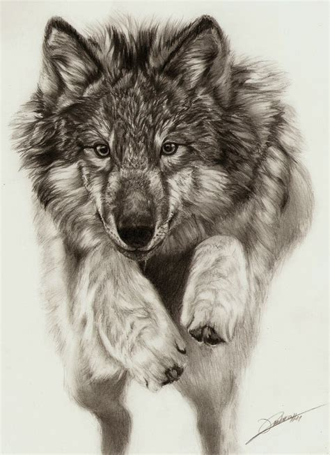 wolves drawings jumping wolf by ambr0 on deviantart