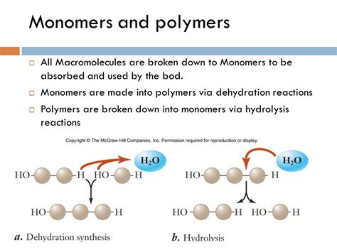 carbohydrates monomer and polymer monomers polymers and macromolecules biomolecules ppt