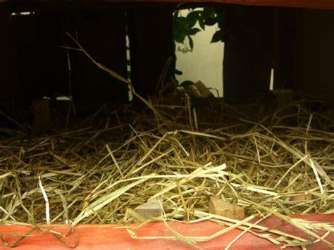 casa per galline galline ovaiole espertocasaclima
