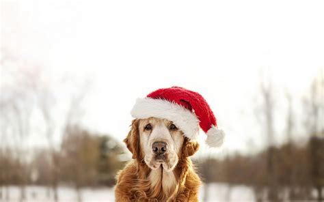 dogs in the news in the new year the most beautiful in the world new year 2015