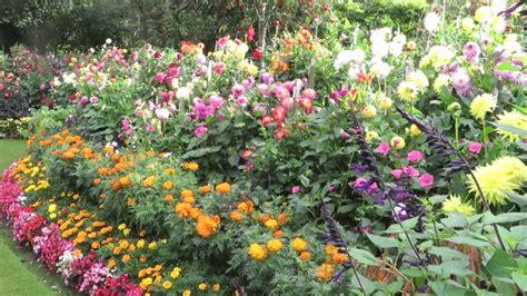Dahlia Flower Garden Images About Dahlia Gardens On Gardens Hd Dahlia Garden Wallpaper Free