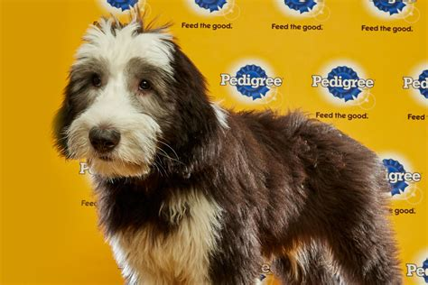 puppies on meet the puppies of the 2016 puppy bowl dgp for pets