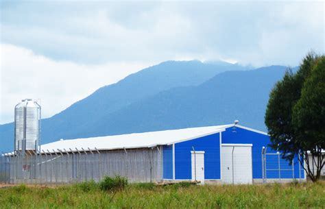 Broiler Poultry Farm Shed by Poultry Farming Shed China Poultry House China Chicken