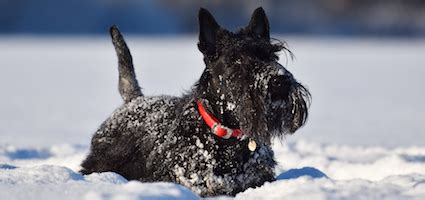 how to help dogs with skin how to help your avoid itchy skin in the winter