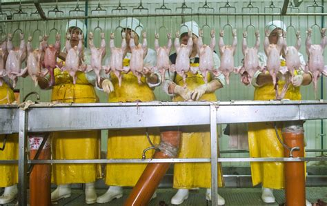 All The News Thats Fit To Eat Jan 9 by All The News That S Fit To Eat New Poultry Gmo