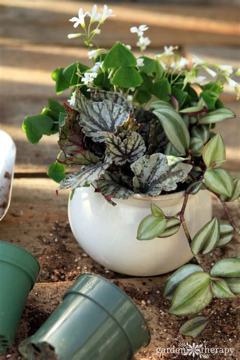 prevent   rid  annoying fungus gnats naturally