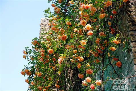 giardino di ninfa roma giardino di ninfa alla scoperta delle piante cose di casa