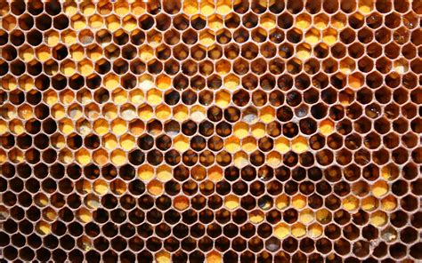 Honey Comb Honeycomb the honey honeycomb wallpaper honey honeycomb iphone wallpaper honey honeycomb