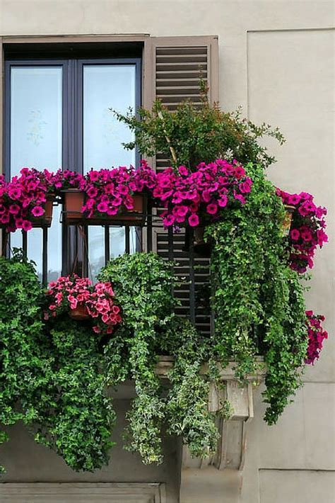 17 best images about tuscan floral on pinterest feathers the 25 best balcony flowers ideas on pinterest small