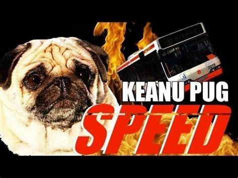 pug home alone speed spoof starring pug