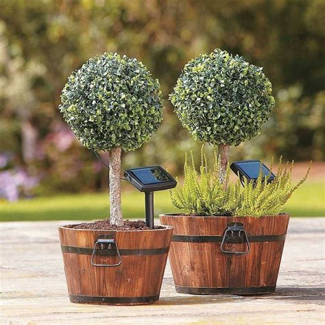 alberi da giardino piccoli alberi da giardino alberi latifolie alberi da giardino