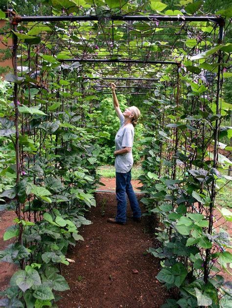 vegetable garden design diy bean trellis gardenista