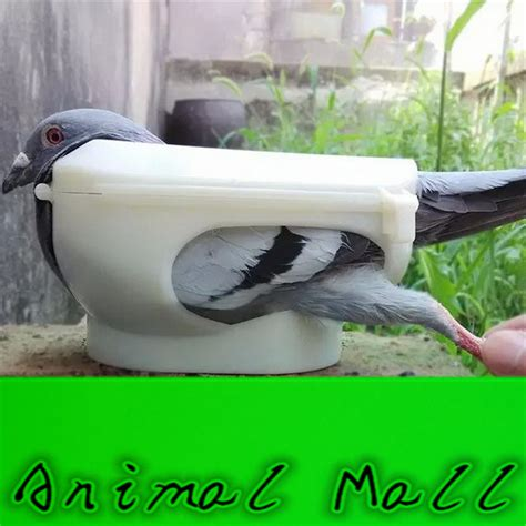 Pigeon Medicine new pigeon holder columba bird clothes given medicines