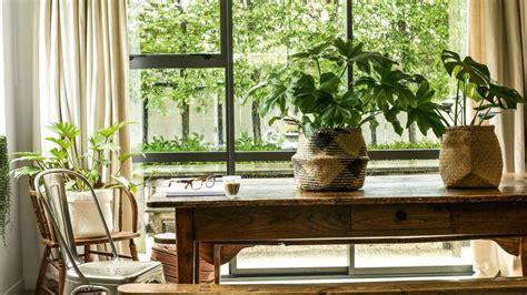 pick  perfect indoor plant   room