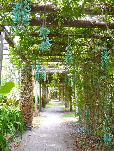 Arbor Botanical Gardens by 17 Best Images About Jade Vine On Turquoise