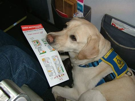 puppy on plane on plane all pet news
