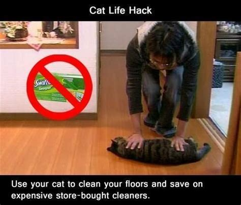 Meme Hack - cat life hack meme slapcaption com roflcopter pinterest