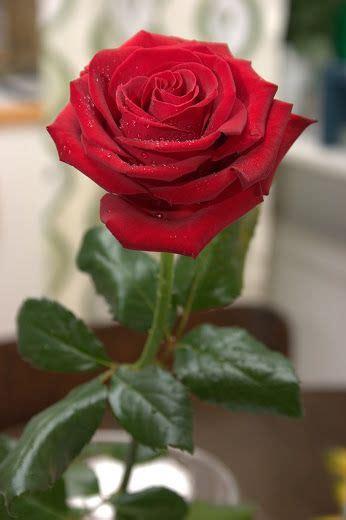 Excepcional  Rosas De Jardin #4: F578fb5d4b8f68c25a34ed17943497c2--beautiful-red-roses-pretty-flowers.jpg