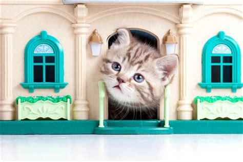 Cat In House by How To Turn An Outdoor Cat Into An Indoor Cat In A