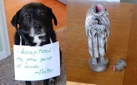 patron of dogs i decapitated the patron of animals dogs patron