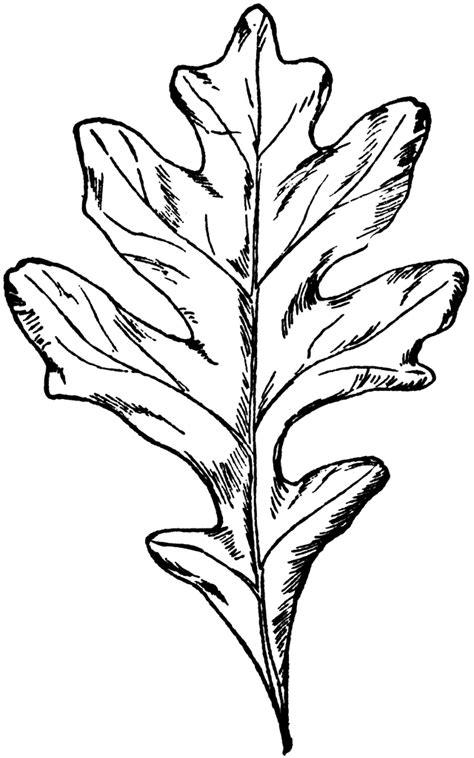 Oak Leaf Stencil Printable Coloring Home Black White Oak Leaf