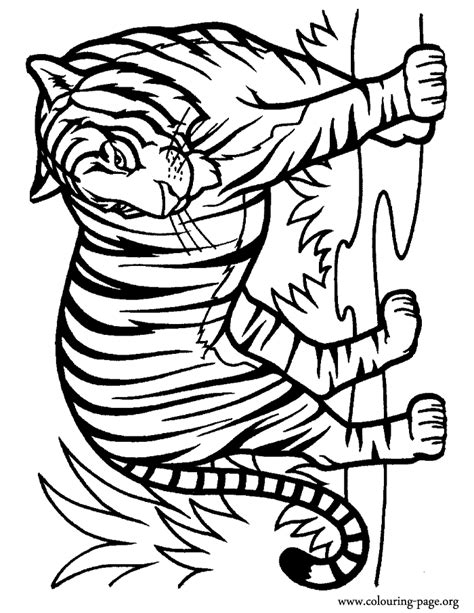 intricate cat coloring pages free intricate cat coloring pages