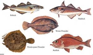 kinds of fish to eat