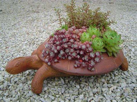succulent turtle 1000 images about tuin on pinterest gardens planters