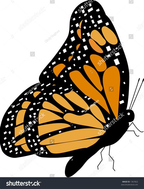 Butterfly L by Monarch Butterfly Lside View Vector Stock Vector 1367822