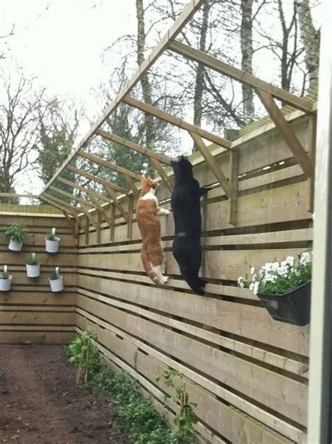 Hgtv Design App 33 best images about cat proof fence on pinterest