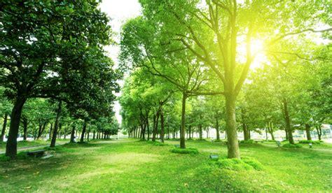 imagenes deareas verdes importancia de un 225 rea verde parques alegres i a p