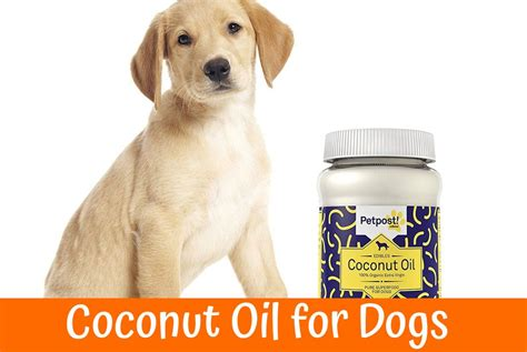 coconut for dogs is the coconut for dogs a healthy product for the coat and the skin of the