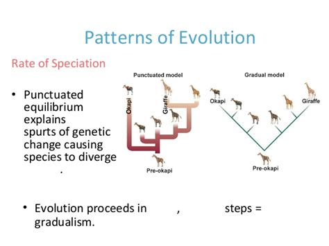theory and pattern in plant defense allocation chapter 15 evolution all sections 15 1 15 3