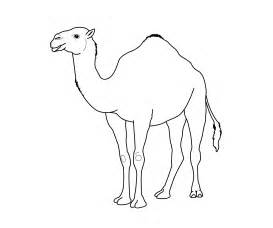 camel coloring sheet camel coloring pages bestofcoloring